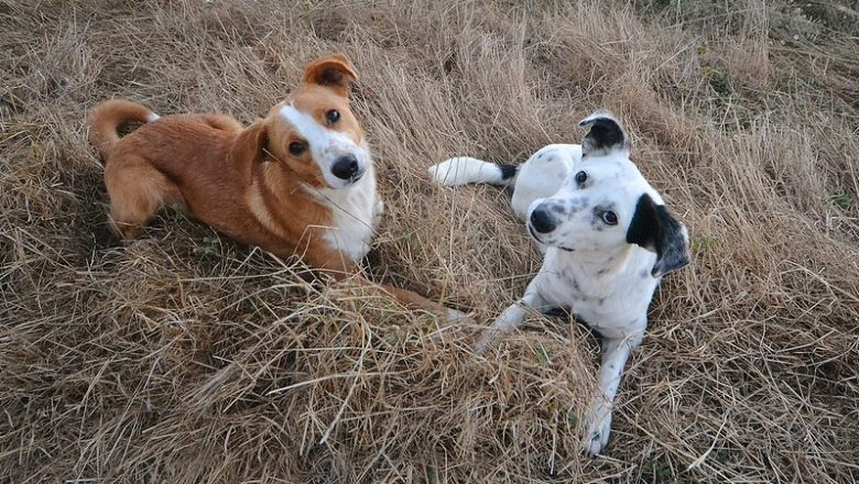 Preventing Your Dog From Catching Diseases